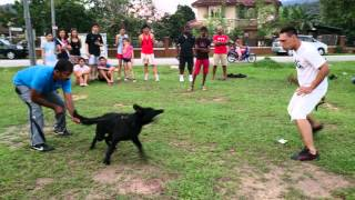 Henry Professional Dog Trainer In Malaysia Did A Demo In Semenyih