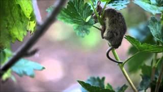 Scared mouse and hungry cat / Бедная мышка, котяра уже облизывается :)