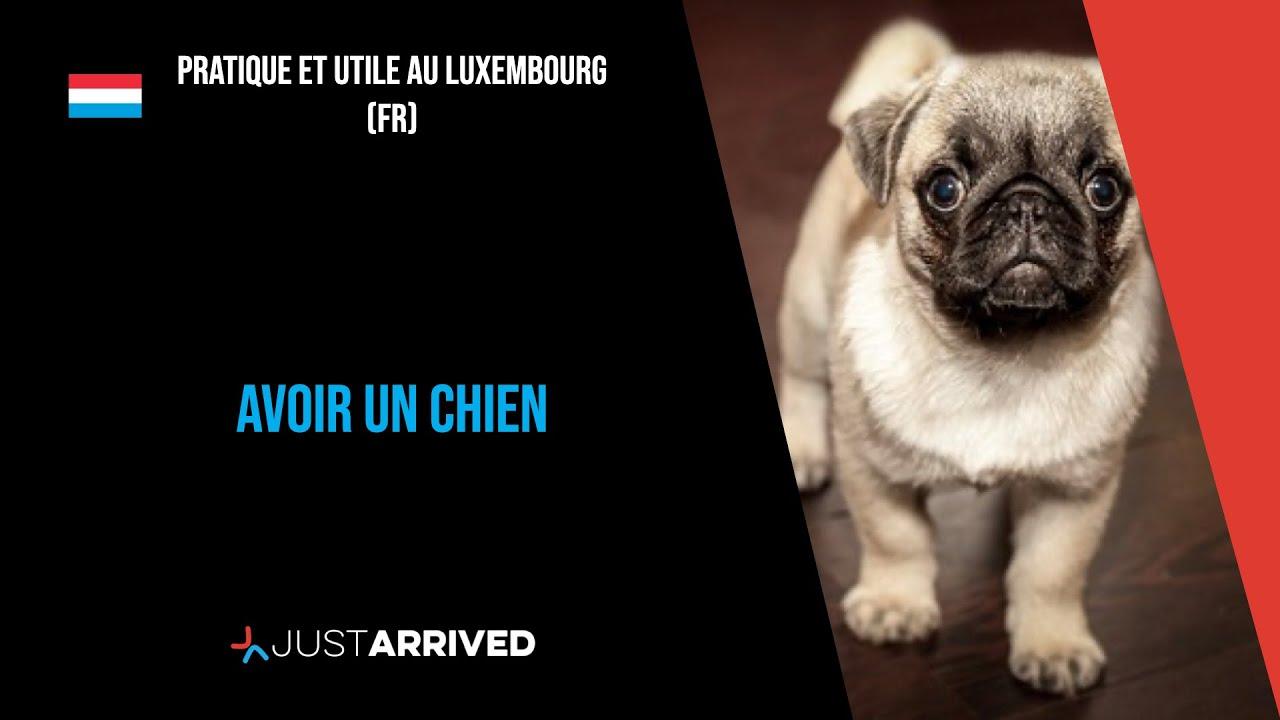 Avoir Un Chien Ou Un Chat Au Luxembourg Formalites Et Refuges