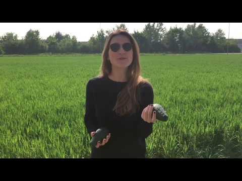 La frutta esotica: come utilizzarla | Bruno Barbieri Chef from YouTube · Duration:  51 seconds