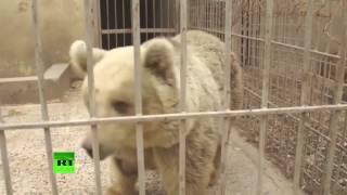 Львов и медведя спасли из разрушенного зоопарка Мосула