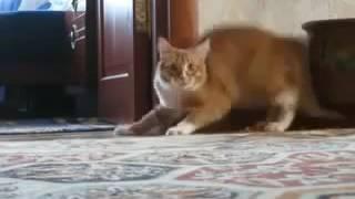Самое прикольное видео Кот ушёл! Cat gone