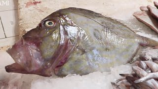 Filleting John Dory in ONE Minute  John Dory Fish Cleaning and Filleting skills