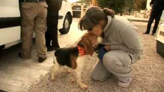 Beagles Rescued From Certain Death