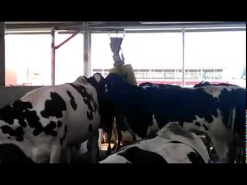 cow brush machine