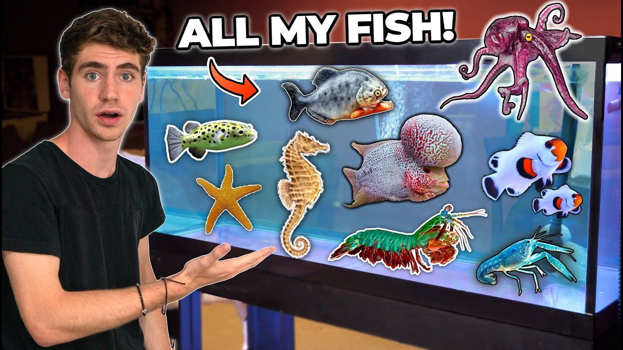 ALL MY FISH & RARE EXOTIC ANIMALS!!! (room tour)