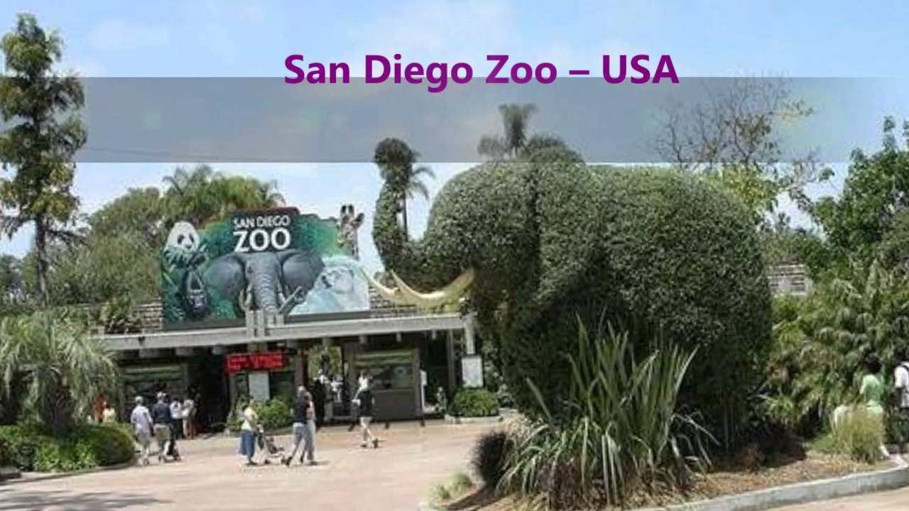Most Fascinating Zoos In The World YouTube - The 12 best zoos in the world
