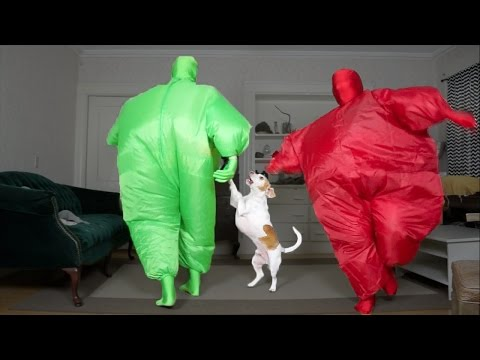 Dog Gets Surprise Dance Party w/Chub Suit Men (Nic Cage): Funny Dog Maymo