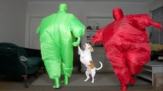 Dog Gets Surprise Dance Party w/Chub Suit Men (Nic Cage): Funny Dog Maymo thumbnail