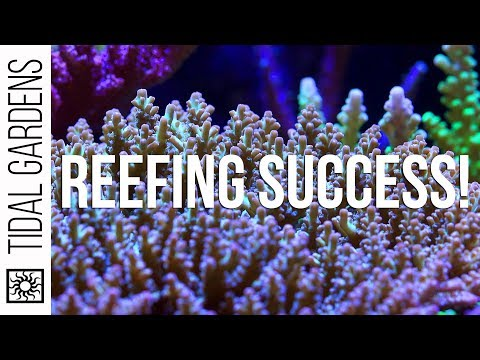Reefing Success 3 Ways - Let's Compare