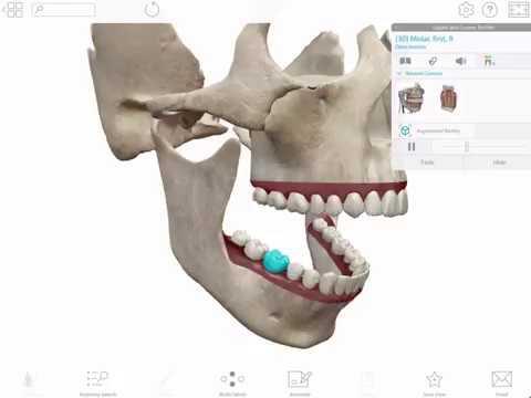 Human Anatomy Atlas 2020 Apk + OBB Data [Unlocked] v2020 0 71