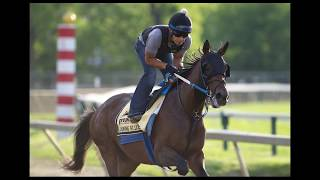 Lookin At Lee Horse Preview -  Top 2017 Belmont Stakes Contenders