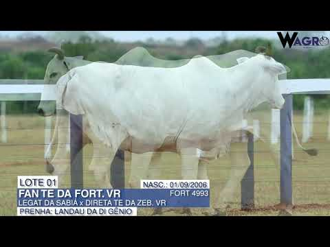 LOTE 01   FORT 4993