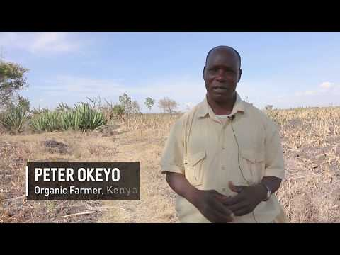 Nourishing the world, organically | Organic farmers dealing with drought