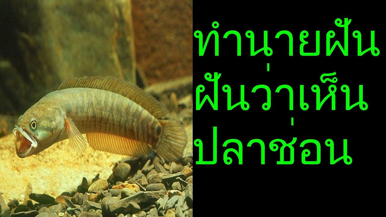 ฝ นว าเห นปลาช อน