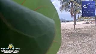 Preview of stream Tamarind Reef Resort, Spa & Marina