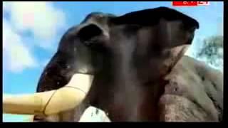 BANGUR CEMENT NEW TV AD 2013 SAASTA NAHI SABSE AACHA
