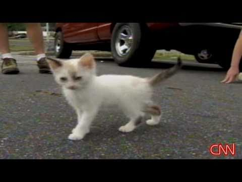 Kittens thrown out car window