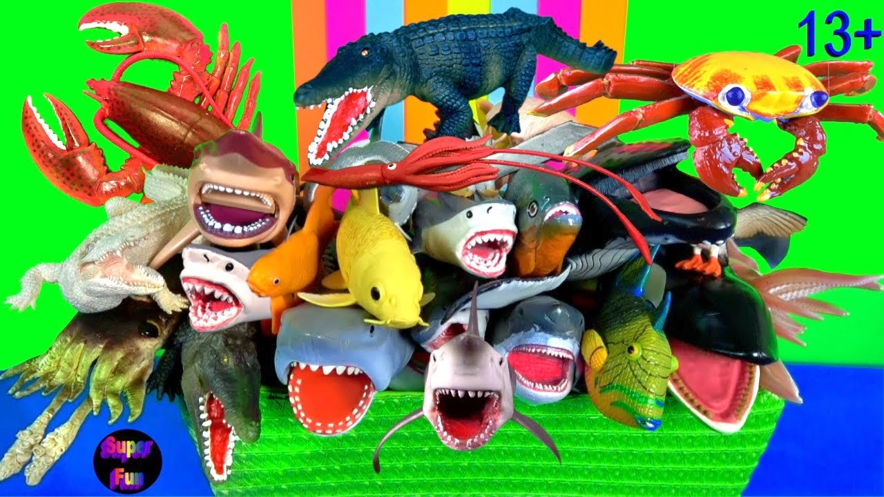 Sea Animals  - Sharks, Fish, Whales, Lobster, Shellfish, Cephalopods, Crustaceans 13+