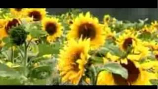 Download zinda huva subha subha by fransis feroz MP3 song and Music Video