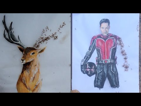 Talented Artist Creates Incredible Drawings Using Live Ants