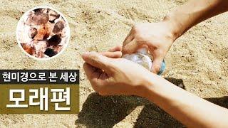 [현미경으로 본 세상] 바다에서 직접 가져온 모래편 #…