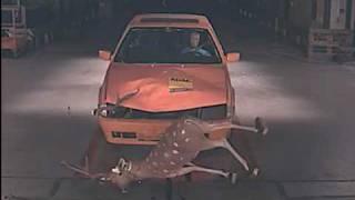 TCS Crashtest Frontalkollision mit Wild / Collision frontale avec du gibier