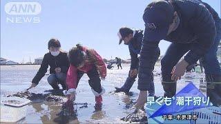 千葉県木更津市では、早くも親子連れらが潮干狩りを楽しんでいます。 木...