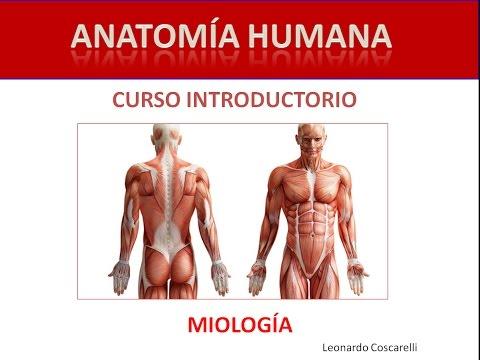 Curso Introductorio de Anatomía Pedagógica - YouTube