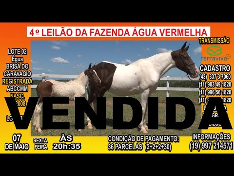 LOTE 02 - 4º Leilão da Fazenda Água Vermelha - 07 de Maio às 20:35h - Canal TerraViva