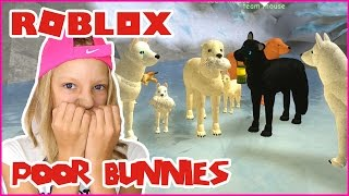 Eating Poor Bunnies / Wolf's Life