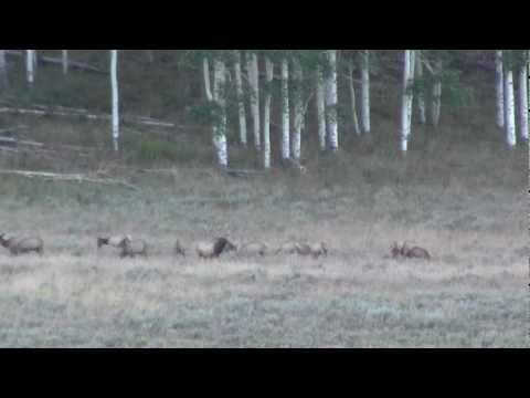 Elk on Flattops Wildlife Ranch 2 - Toponas, Colorado - Ranch Marketing Associates