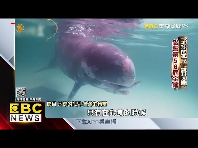 「地球的孤兒」雙料入圍 敲響第56屆金鐘 @東森新聞 CH51