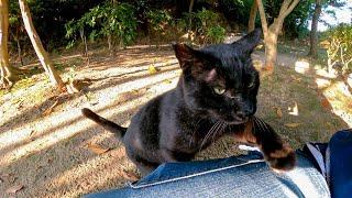 人懐っこい黒猫がモフられにきた