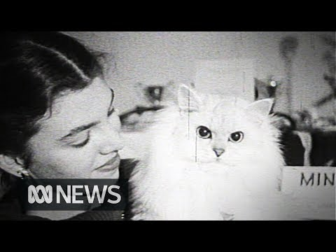 1959 cat show | RetroFocus