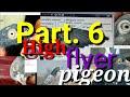 High flyer pigeon. Ache Nasal ke kabutar ki pehchan kaise kre. Part. 6