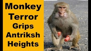 Monkey menace causing panic among residents