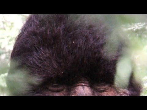 The U.S. government knows Bigfoot is Real!  Jeff Meldrum and Todd Standing talk Sasquatch