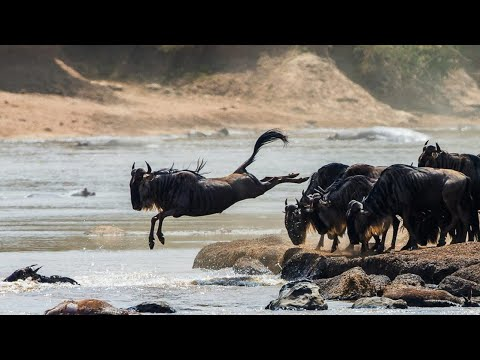 Вопрос: Какие животные применяют танатоз, спасаясь от врагов?