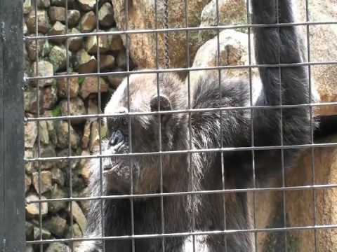 JOS Zoo, Nigeria