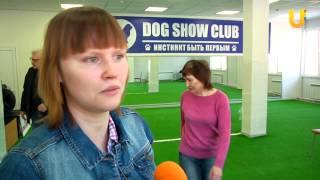 Глазами животных, выпуск 188 (Конкурс цирковой дрессировки собак, часть 1)