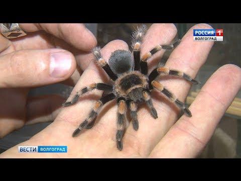 В Волгограде девушка пострадала от укуса ядовитого паука