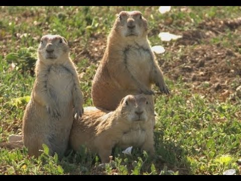 The Texas Bucket List - Prairie Dog Town in Lubbock
