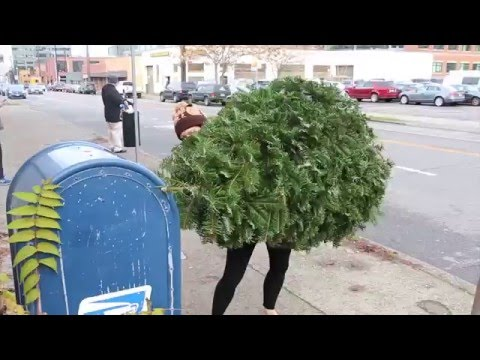 How To Get Rid of A Christmas Tree - YouTube
