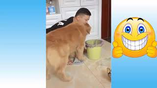 Vídeos De Gatos Engraçados E Cachorros Fofos | Vídeos Engraçados