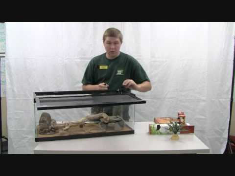 Setting up an Enclosure for Bearded Dragons