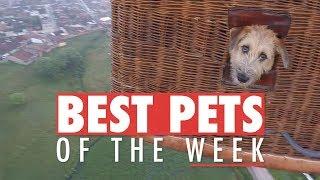 Best Pets of the Week | November 2017 Week 3