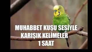 muhabbet kuşu sesiyle karışık kelimeler 1 saat konuşma eğitim kaydı