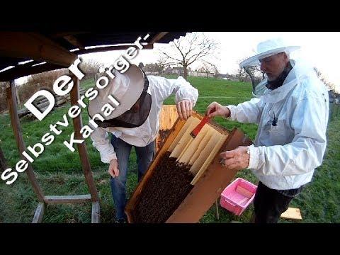 Bienenkiste Honigraum vorbereiten