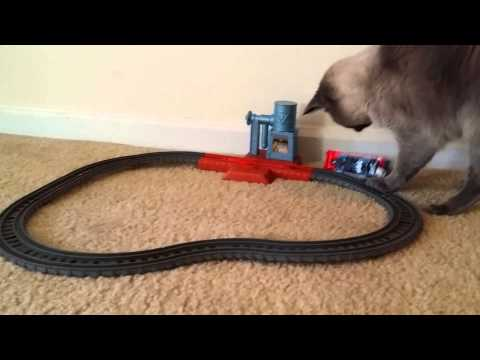 """Siamese/Manx""""Cat playing with toy train"""""""